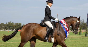 ELITE FLOATS AUSTRALIA are proud sponsors of the EWA SHOW HORSE